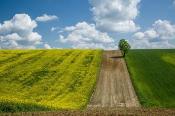 rzepak pola roztocze fotograf rzeszów plener
