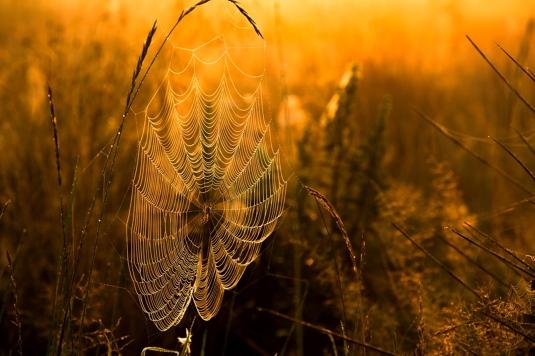 natura babie lato fotograf rzeszów