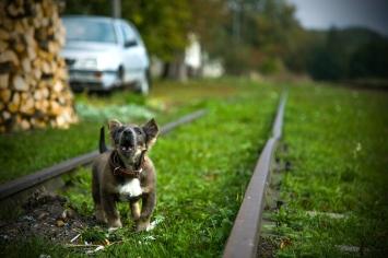 pies plener fotograf rzeszów